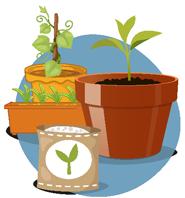 Plants, plantes potagères et graines
