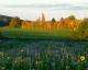 Les Jardins De La Rue - image 3