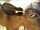 Gaec La Chèvre Gourmande - image 1