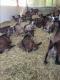 Gaec La Chèvre Gourmande - image 3