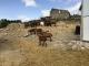 Gaec La Chèvre Gourmande - image 4
