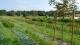 Le Jardin En Herbier - image 5