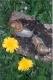 L'escargot Des Chazeaux - image 1