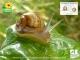 L'escargotière Champenoise - image 1