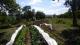 Le Jardin Aux Abeilles - image 2