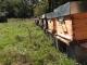 Des Milliers D'abeilles - image 3