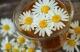 Herboriana- Ethique Et Naturel-ppb - image 1