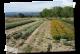 Au Détour Des Plantes - image 2