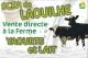 Ferme De Laouilhe - image 1