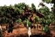 Torrefaction Des Dombes - image 5