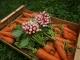Les Légumes Du Pote à Gers - image 1