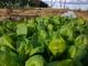 Les Légumes Du Pote à Gers - image 4