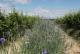 Plantbiorel - image 1