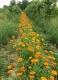 Plantbiorel - image 5