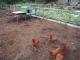 Les Jardins De La Barette - image 3