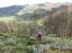 Délires D'herbes - image 2