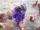 La Petite Ferme Bio 34 - image 1