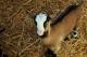Gaec Des Vaches Et Des Biquettes - image 1