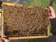 L'abeille Du Haut-doubs - image 5