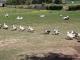 Les Canards Des Londes - image 1