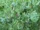Scea L'escargot De Mouliherne - image 1