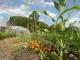 Les Jardins Du Basmont - image 2