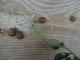Pyrèn'escargots - image 3