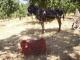 La Ferme Des Fruits Secs 47 (favre M-h.) - image 4