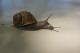 L'escargot De La Ferme Du Lomont - image 3
