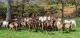 La Chèvre De Russilly - image 2