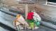 Délices Fleuris - image 3