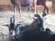La Chèvre Qui Rit - image 6