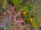 Ronde De Légumes - image 1