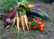 Ronde De Légumes - image 2