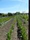 Les Jardins Auvergnats - image 1