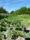 Les Jardins Auvergnats - image 2