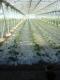 Les Jardins Auvergnats - image 3