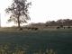 Bisons D'auvergne - image 3
