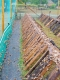L'escargot Morvandiau - image 1