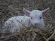 La Ferme Des Chèvres Feuilles - image 3