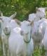 La Ferme Des Chèvres Feuilles - image 5