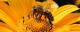 Logo Rucher Des Vignes Et Prairies De La Nied