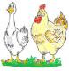 Logo Les Volailles De Svitlana Et Frédéric