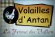 Logo Volailles D'antan