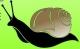 Logo Mille Et Une Coquilles