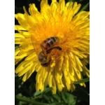 Logo Des Milliers D'abeilles