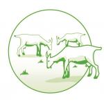 Logo Earl Les Pampilles