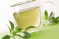 Thé vert bio origine sud de l'inde